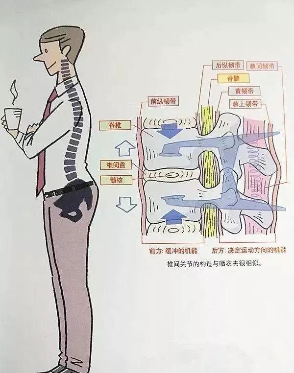 如果腰椎有问题,就来找易筋洗髓功吧!